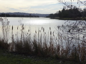 Rother Valley Lake