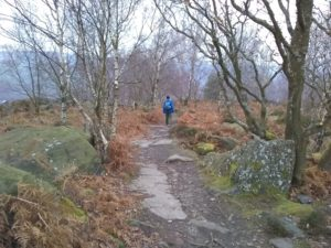 Wharncliffe Wood
